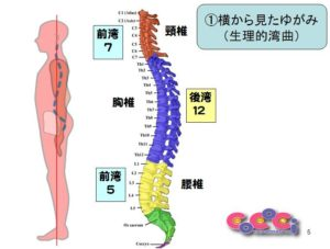 千葉県の整体で理想の姿勢に戻す事で子供の自律神経機能を改善する為のイメージイラスト