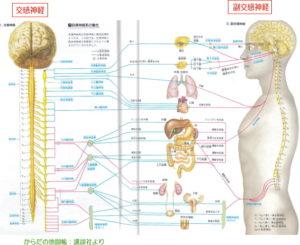 千葉県で子供の自律神経の働きの問題に詳しい整体